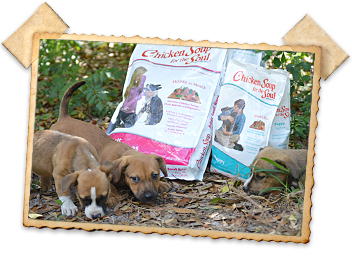 Chicken Soup for the Soul Pet Foods